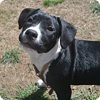 Adopt A Pet :: Fiona - Colmar, PA