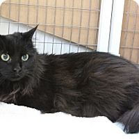 Adopt A Pet :: Lily - Medfield, MA