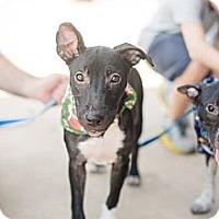 Adopt A Pet :: Minnie - San Antonio, TX