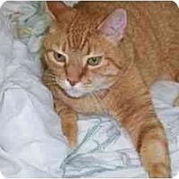 Adopt A Pet :: Dr. Bombay - Secaucus, NJ