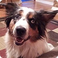 Adopt A Pet :: Flo - Savannah, GA