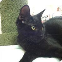 Adopt A Pet :: Garro - Trevose, PA