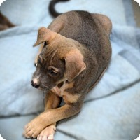 Adopt A Pet :: Boomer - Burleson, TX