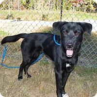 Adopt A Pet :: Lucy - Bardonia, NY