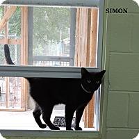 Adopt A Pet :: Simon - Washington, GA