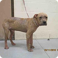 Adopt A Pet :: BENJAMIN - Conroe, TX