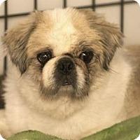 Adopt A Pet :: Clint - Colorado Springs, CO