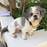 Adopt A Pet :: FILO - Los Angeles, CA
