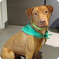 Adopt A Pet :: Autumn - Boston, MA