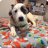Adopt A Pet :: Walker - Kittery, ME