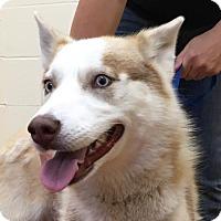 Adopt A Pet :: Reesa - Campbell, CA
