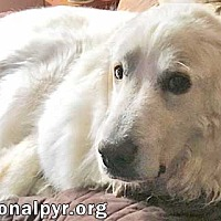 Adopt A Pet :: Annie in OH - new! - Beacon, NY