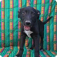 Adopt A Pet :: Pantera - El Cajon, CA