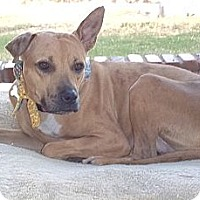 Adopt A Pet :: HONEY GRACE - Phoenix, AZ