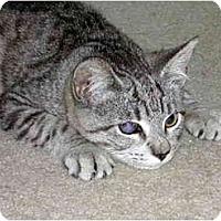 Adopt A Pet :: Mindy - New Port Richey, FL