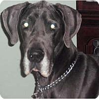 Adopt A Pet :: Blue - Hanover, MD