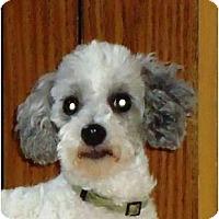 Adopt A Pet :: Kyzer - Toronto/Etobicoke/GTA, ON