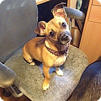 Adopt A Pet :: Candy - Lawrenceville, GA
