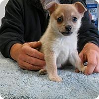 Adopt A Pet :: Wilson - Tillamook, OR