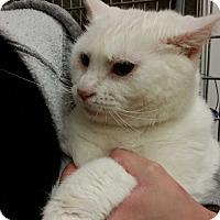 Adopt A Pet :: Donny - Alpharetta, GA