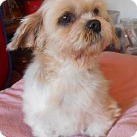 Adopt A Pet :: Scarlett - Yucaipa, CA