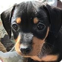 Adopt A Pet :: Burt Bechamel - Houston, TX