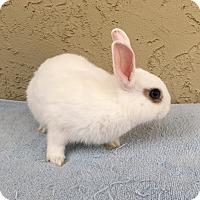 Adopt A Pet :: Merry - Bonita, CA