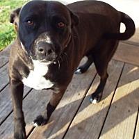 Adopt A Pet :: Kaily - San Antonio, TX