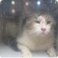 Adopt A Pet :: 339520 - Wildomar, CA