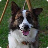 Adopt A Pet :: Bobby - San Ramon, CA