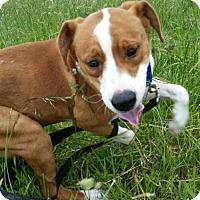 Adopt A Pet :: Gilbert - Slanesville, WV