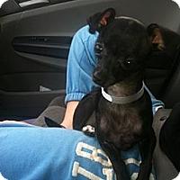Adopt A Pet :: Minney - Pembroke pInes, FL