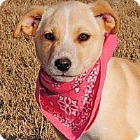 Adopt A Pet :: Tracy - Gonzales, TX
