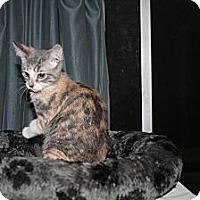 Adopt A Pet :: Scrabble - Santa Rosa, CA