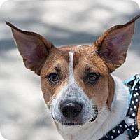 Adopt A Pet :: Louisa - Phoenix, AZ