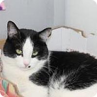 Adopt A Pet :: Davis - El Cajon, CA