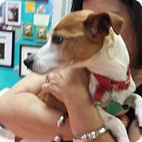 Adopt A Pet :: Sphinx - Chicago, IL