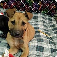 Adopt A Pet :: Ritz - Scottsdale, AZ