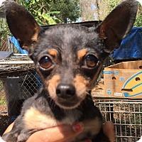 Adopt A Pet :: Dido - Orlando, FL