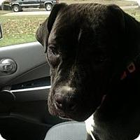 Adopt A Pet :: Buffy - Newport, KY