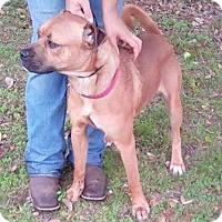 Adopt A Pet :: Anton - Orlando, FL