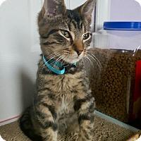 Adopt A Pet :: Cole -Adoption Pending! - Colmar, PA