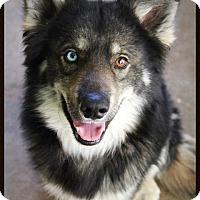 Adopt A Pet :: Brody - Liberal, KS