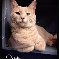 Adopt A Pet :: Oriole - Hartford City, IN
