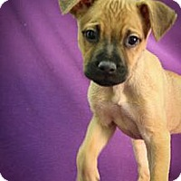 Adopt A Pet :: Donner - Broomfield, CO
