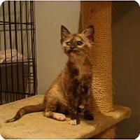 Adopt A Pet :: Mabel - Muncie, IN