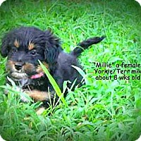Adopt A Pet :: Millie - Gadsden, AL