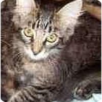 Adopt A Pet :: Garret - Franklin, NC