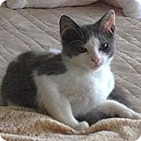 Adopt A Pet :: Mizner Marie - Deerfield Beach, FL