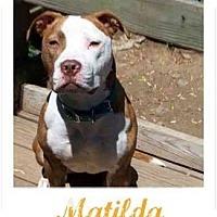 Adopt A Pet :: Matilda - Dallas, PA